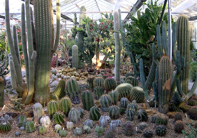 Hollygate Cactus Garden, Ashington, Sussex