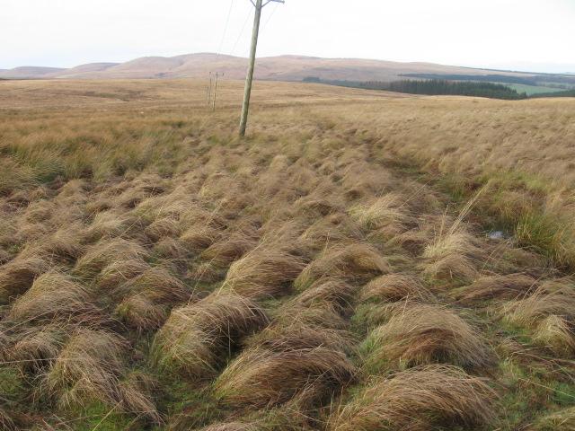 Power line across moorland