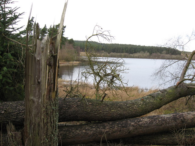 Windblown trees at Sweethope Lough