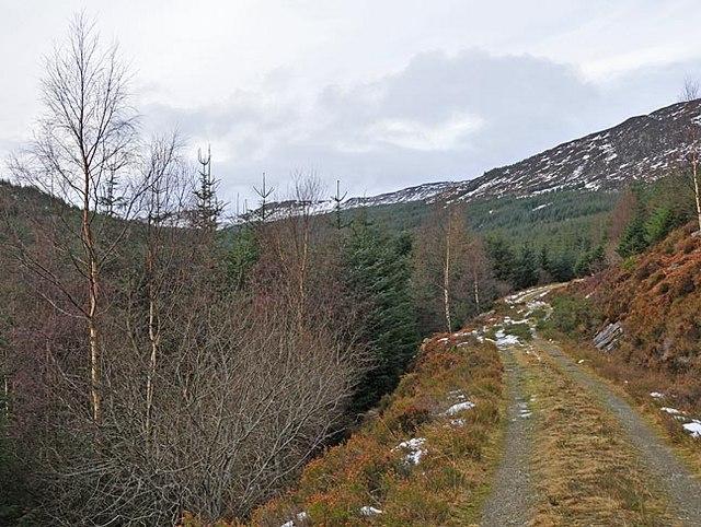 Forestry track in Lower Glen Boltachan