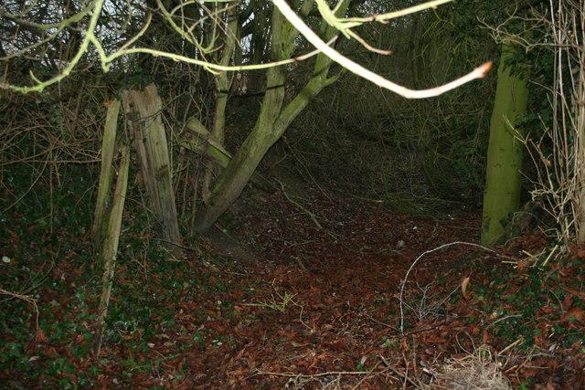 Stour Navigation, near Wormingford