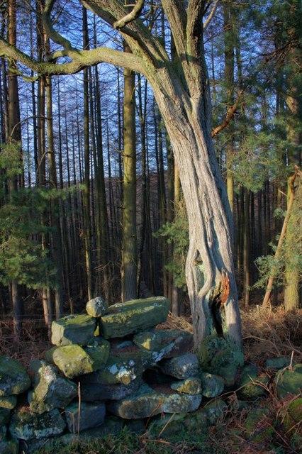 Hazel Head Wood