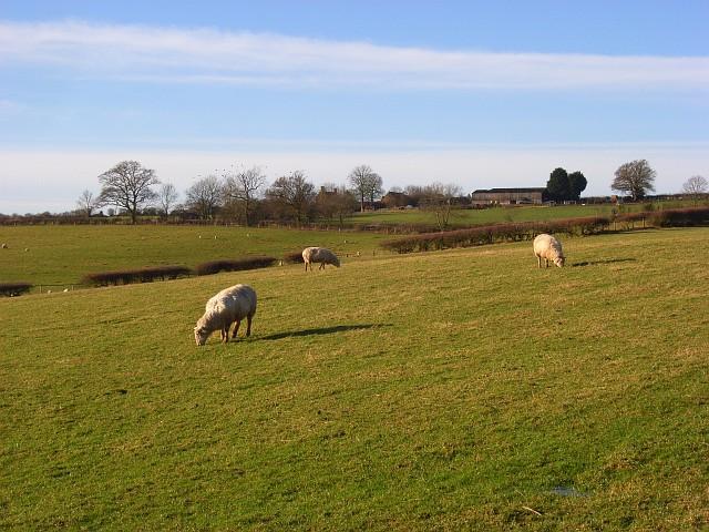Pasture, Cropredy