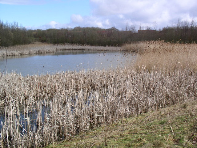 Lakes, Great Notley Country Park