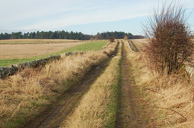 Road to Burnside Wood