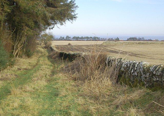 Burnside Wood NE edge