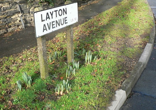 Early signs of spring, Layton Avenue, Rawdon