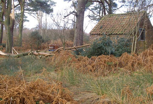 Burnside Wood
