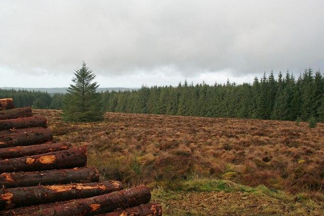 Kershope Forest