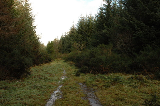 Track in Bellton Wood
