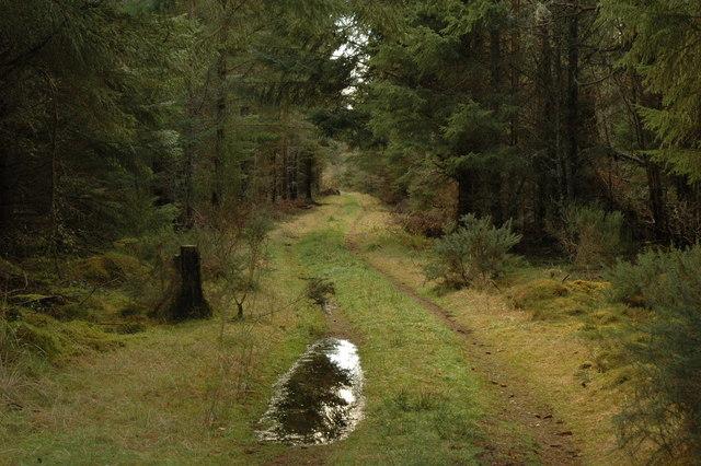 Bellton Wood