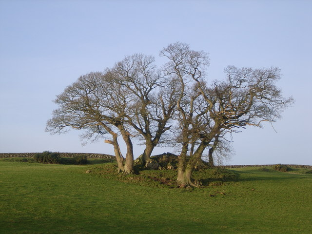 A strange group of trees in a clump