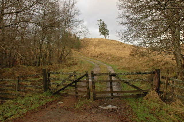 Gate and farm track near Killen