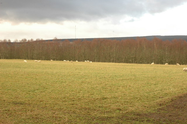 Field by Bog of Shannon Wood