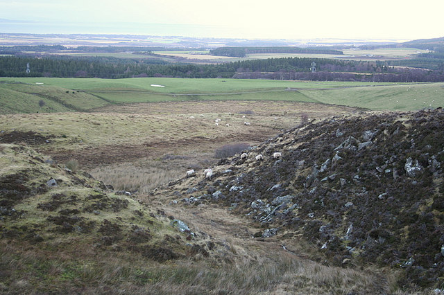 Sheep in a gully east of Clunas reservoir