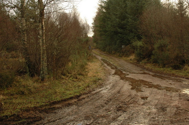 Track junction in Bog of Shannon Wood