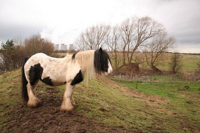 Trent bank pony