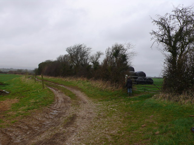 Farm track and hedge near Dewlish