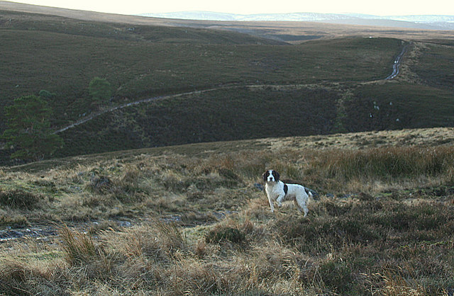 The moorland track south of Carn Maol summit