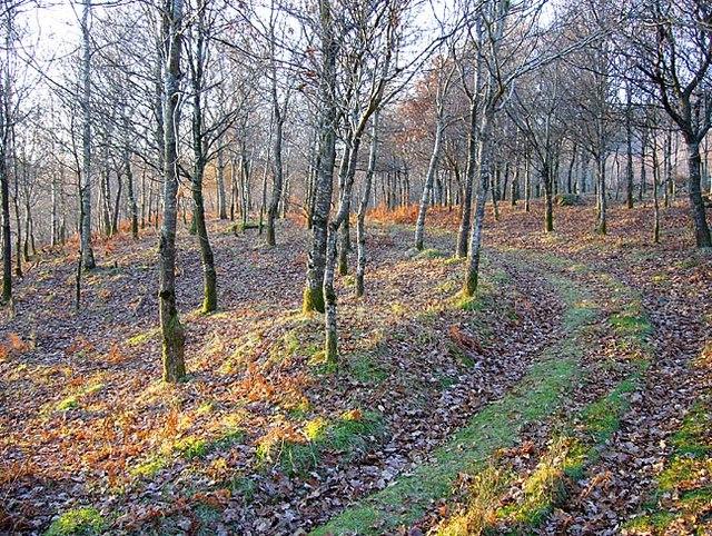 Woodland, near Fordie
