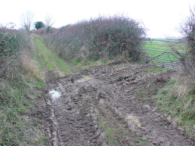 Farm track and hedge near Cheselbourne
