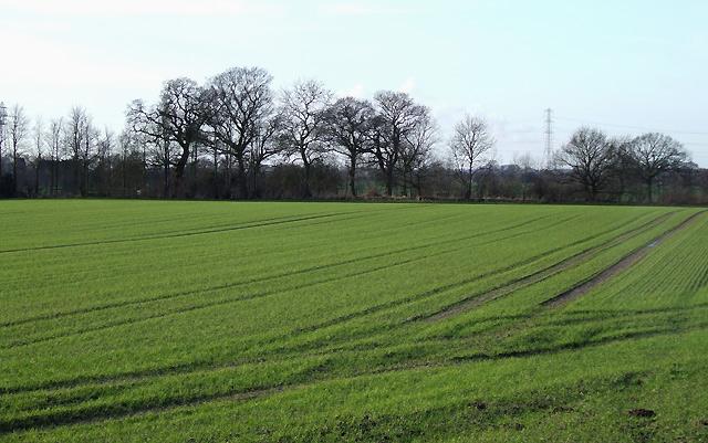 Fields west of  Shareshill, Staffordshire