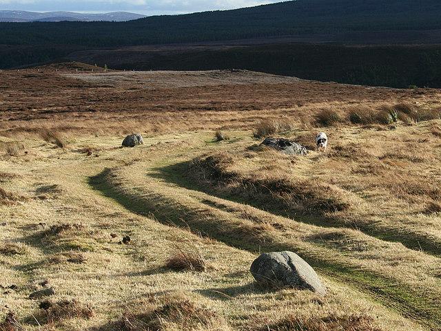 Moorland track north of Cose Burn
