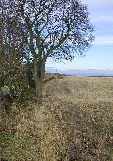 Field edge,  Burnside Muir