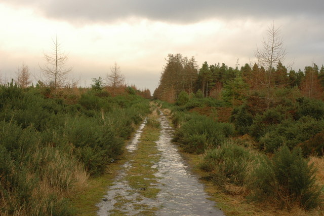 Forest track in Millbuie Forest
