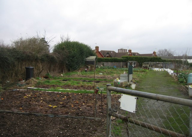 Coronation Road allotments