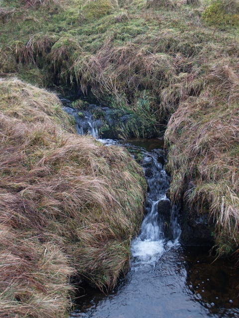 Upper reaches of the Fingland Burn