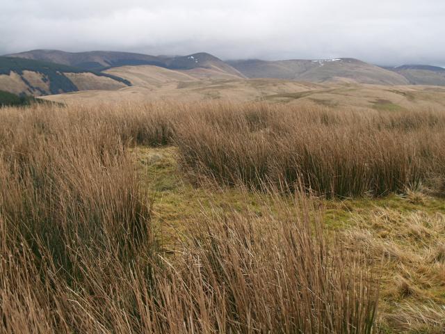 Summit, Peat Hill