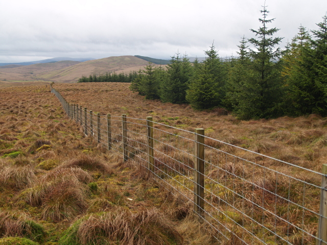 Forest edge and fence, Falla Moss