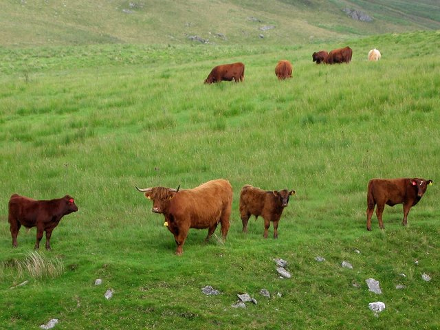 Nant y Moch Highlanders' family snap