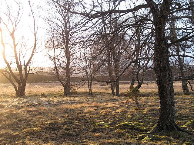 Trees, Insharn