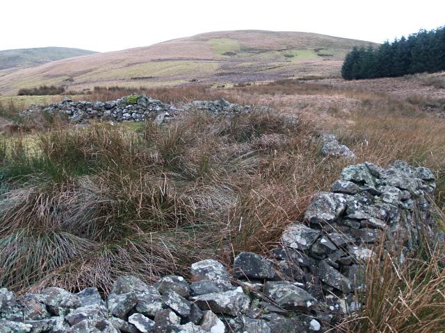 Ruined sheepfold, Hawkshaw Burn