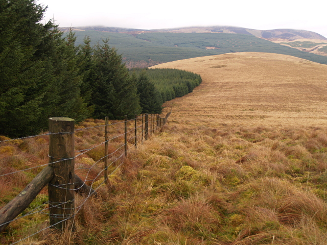 Forest edge and fence, Glengonnor Hill