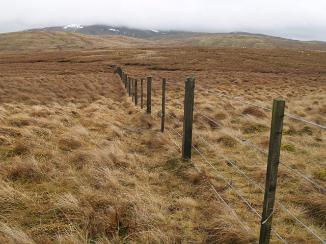 Fence, Falla Moss