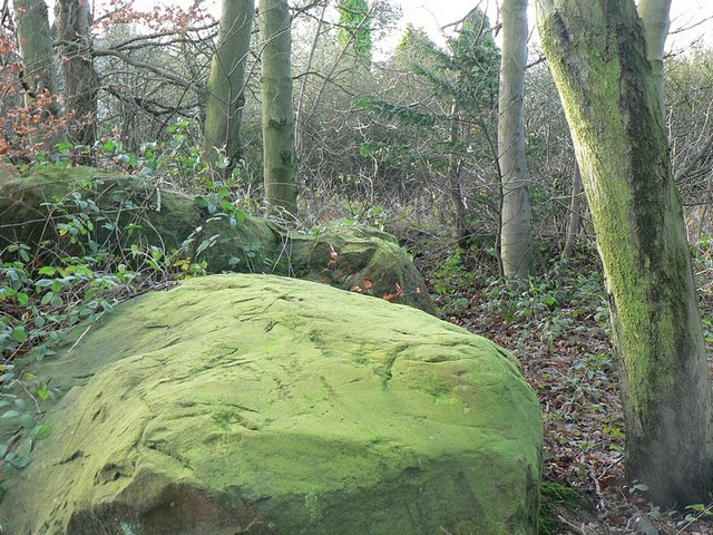 Green rock in the woodland by Bayton Lane
