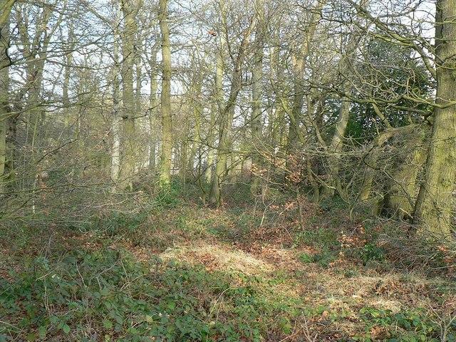 Woodland by Bayton Lane, Horsforth