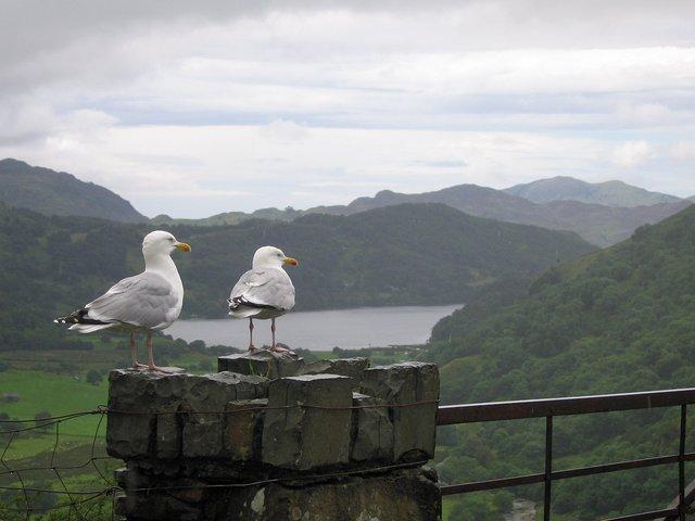 Bird's eye view of Llyn Gwynant