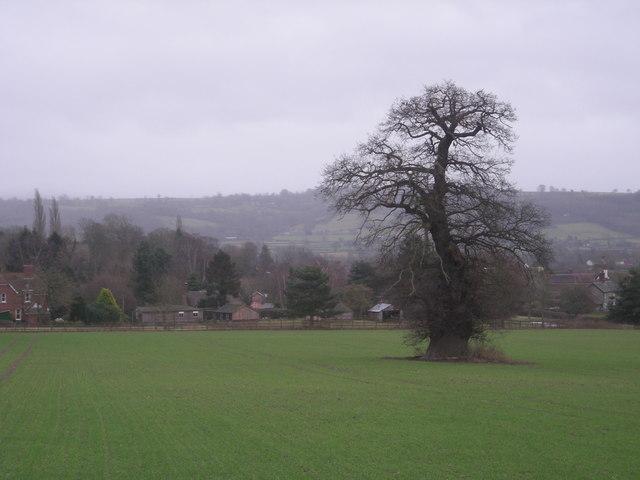 Field & tree near Seifton in winter