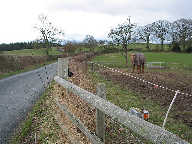 Paddock with electric fence