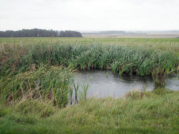 Pond along the Minster Way