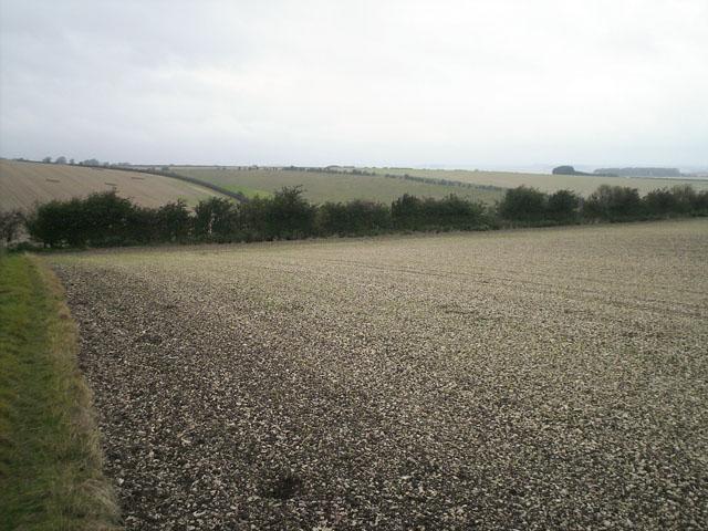 Chalky field