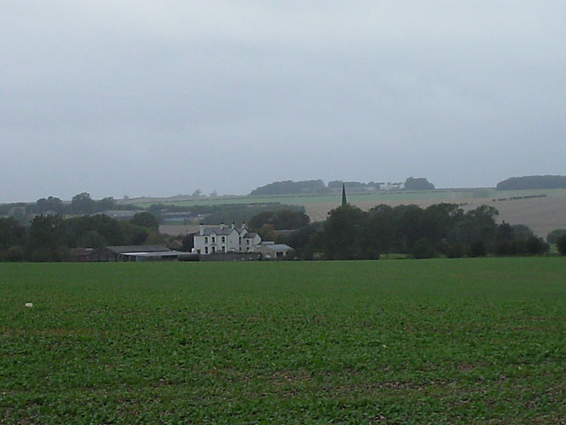 Pea fields near Huggate