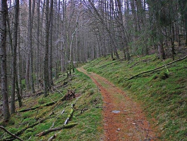 Path through East Dundurn Wood