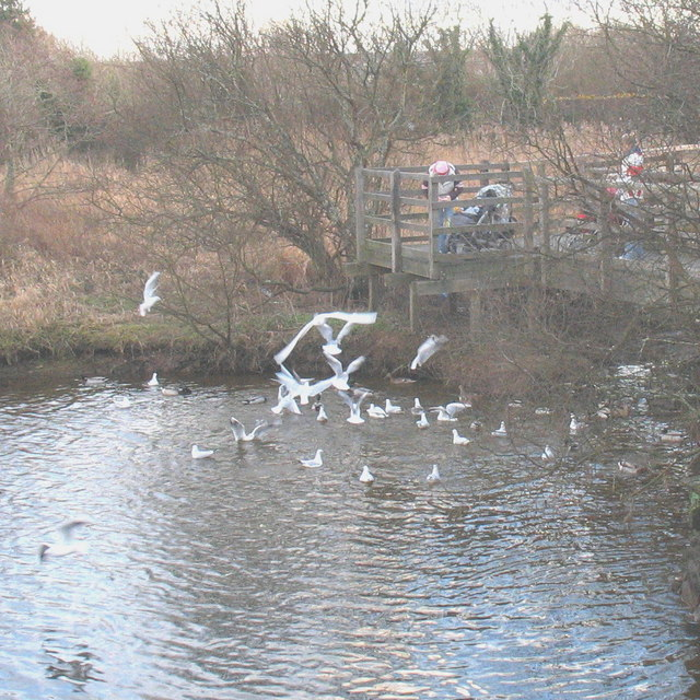 Feeding frenzy at the Lon Cob Bach Nature Reserve