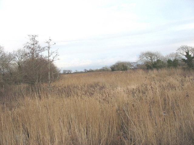 Sedges in the Afon Rhyd-hir wetlands