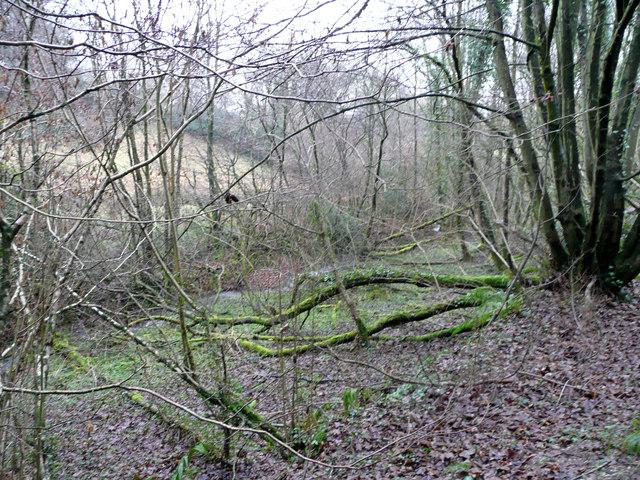 Woodland surrounding a Devon stream